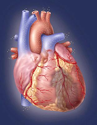 Смертность от сердечно-сосудистых заболеваний в России с 2003 года сократилась на 15 проц