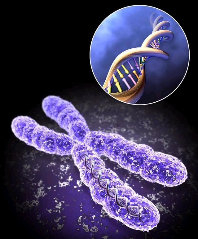 Целью генной терапии являются рак и сердечно-сосудистые заболевания