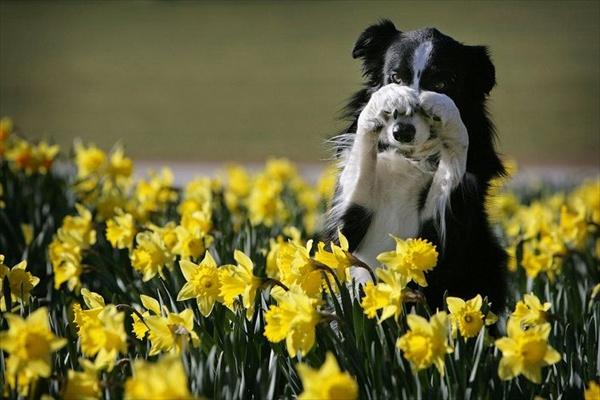 Сезон цветов и ароматов — как избежать аллергической реакции
