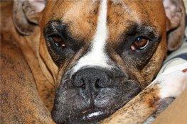 Собаки помогают реабилитироваться после инсульта