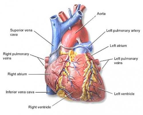 Сердце, давление, конъюктивит, кровотечения из носа и эфирные масла