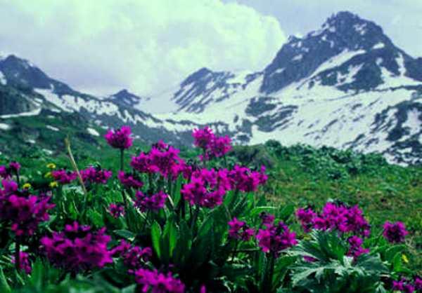 Потенциальных «инфарктников» перепишут в Алтайском крае