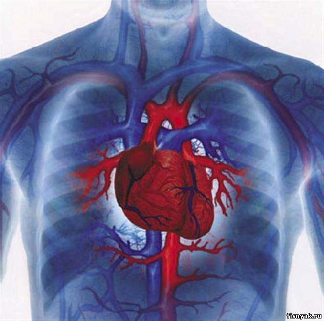 Всероссийская образовательная акция «Здоровые сердца» прошла в Хабаровске