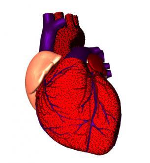 Болезнь сердца — причины, симптомы, лечение