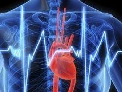 Сердце заставили самовосстанавливаться