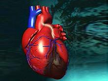 Медицина в шаге от уникального средства, защищающего от инфаркта
