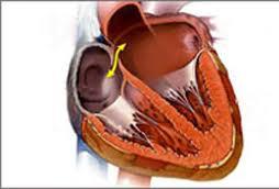 Порок сердца выявит анализ крови