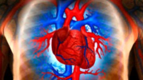 Как уберечь себя от неизбежных заболеваний сердца?