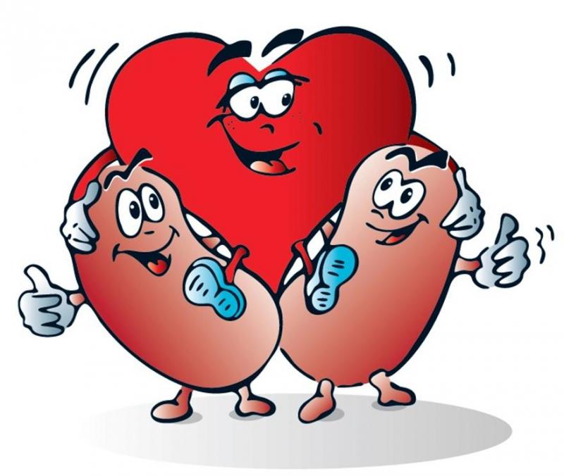 Взаимосвязь между камнями в почках и заболеваниями сердца