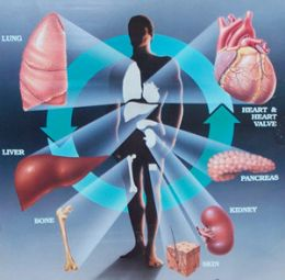 Способность сердца к регенерации определяется числом митохондрий, которое с возрастом уменьшается