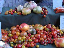 В Испании выяснили, что помидоры лечат сердце