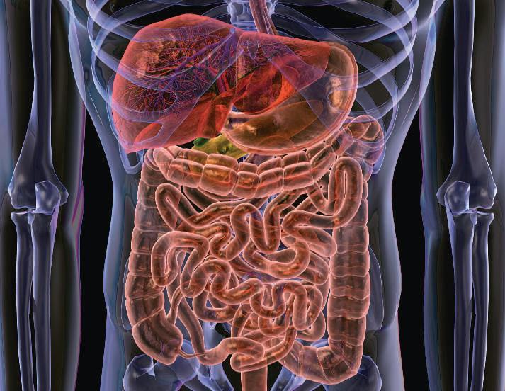 Эффективное лечение дисбактериоза кишечника. Что нужно делать?
