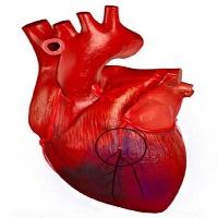 Кислородная поддержка при инфаркте миокарда: больше вреда, чем пользы?
