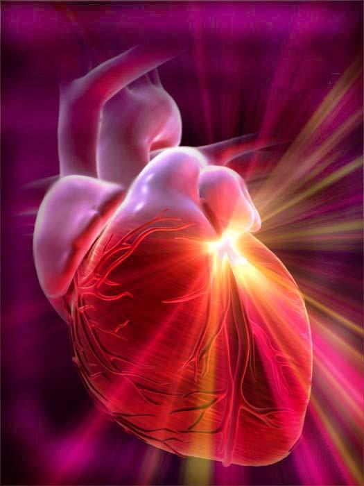 Стволовые клетки могут восстановить поврежденную сердечную мышцу