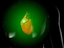 Стволовые клетки сокращают объем рубцовой ткани после сердечного приступа