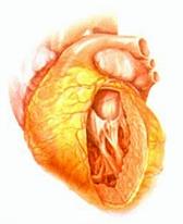 Лечение сердца и витамин D – эффективность не подтвердилась