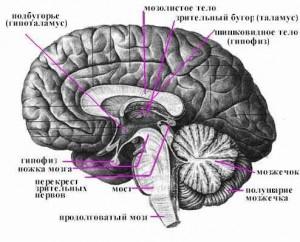 Мозг полнит женскую фигуру