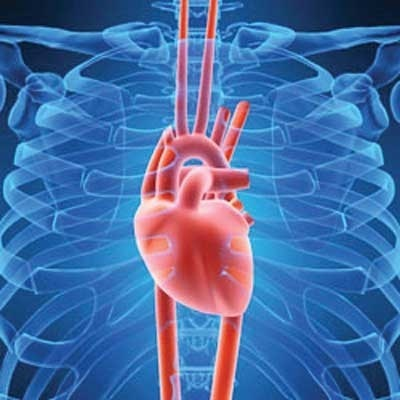 Найден метод выращивания неограниченного количества клеток для восстановления ткани сердца