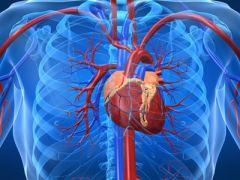 Как питание влияет на здоровье сердца и сосудов?