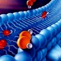 Природный антиоксидант может защитить от сердечно-сосудистых заболеваний