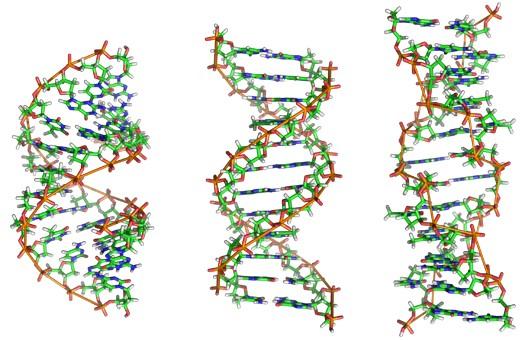 Действие мутации ДНК на мужчин и на женщин