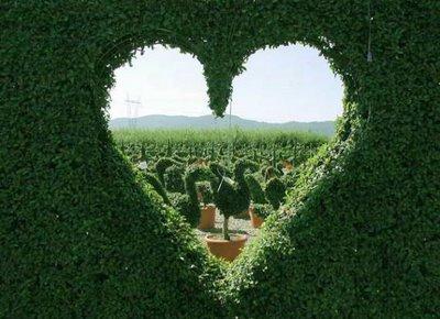 Природные помощники в борьбе с недугами сердца
