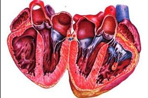 Классификация кардиомиопатий
