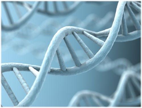 новый ген наследственной легочной гипертензии
