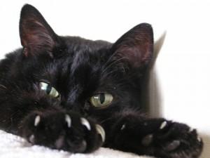 Кошки снижают давление и продлевают жизнь?