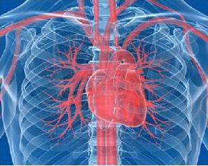 Кардионеврозы. Рецепты народной медицины при кардионеврозах