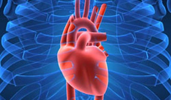 Способность сердца ощущать запахи