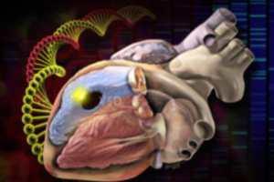 Наследуемые мутации объясняют многие виды пороков сердца