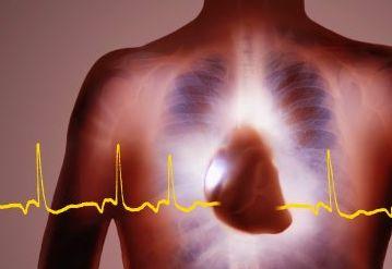 Новое достижение американских учёных — искусственная сердечная мышца