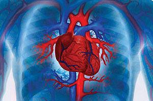 Виды, симптомы и лечение бактериального эндокардита