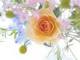 Доставка и заказ цветов на сайте «Букет.ру» — это оперативно и за доступную цену