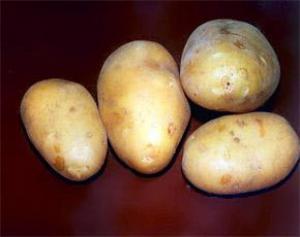 Картофель способен понижать артериальное давление