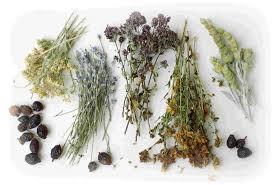 Фитотерапия. Лечение гипотонии сборами лекарственных растений