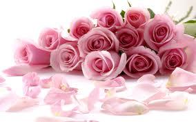 Цветы на любой случай жизни