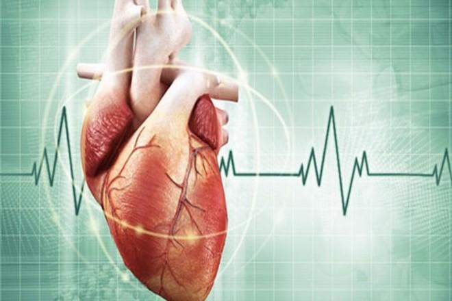 17 удивительных научных фактов о человеческом сердце