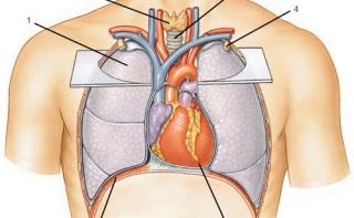 Кардиологи узнали, как разбиваются сердца