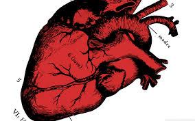 Сердце может питать медицинские устройства