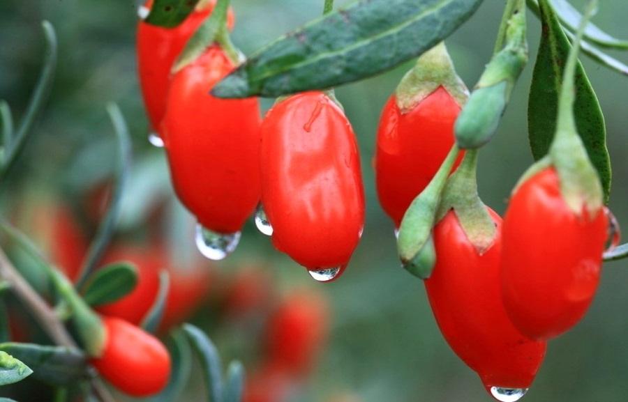 Ключи здоровья этой зимой — экзотические растения
