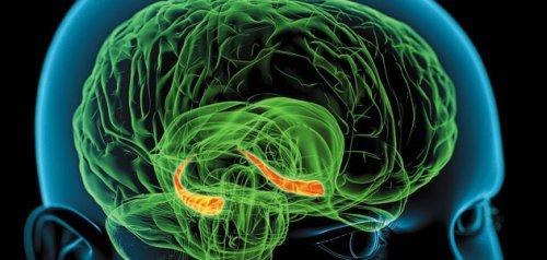 Головной мозг – это биологический компьютер