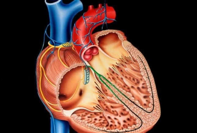 Как влияют на сердце малые дозы алкоголя?
