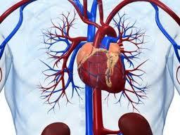Ишемическая болезнь сердца: признаки, симптомы, профилактика