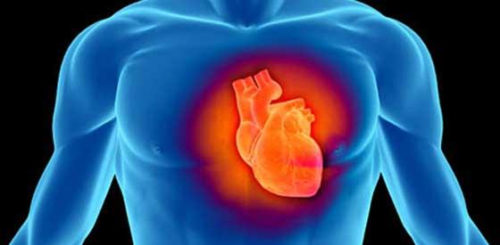 Влияние различных продуктов на сердечно-сосудистую систему