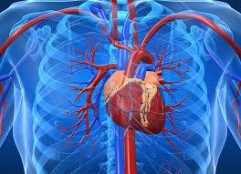 При сердечной недостаточности поможет правильное питание