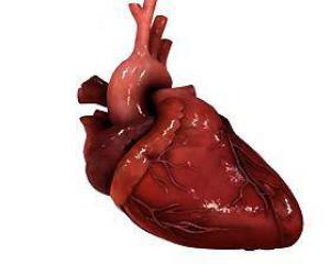 Рецепторы сердечного гормона провоцируют развитие рака на фоне воспаления