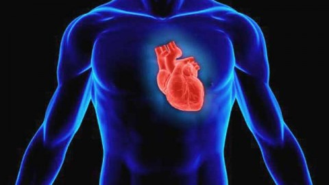 Как мозг зависит от сердца