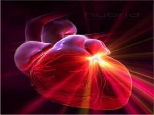 Медики смогут регенерировать сердце человека после инфаркта
